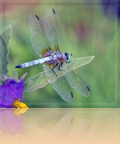 Dragonfly-2