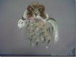 Hawk_thumb.jpg