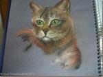 Cat-1_thumb.jpg
