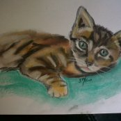 Kitten in Pastel