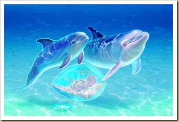 dolphinfetus