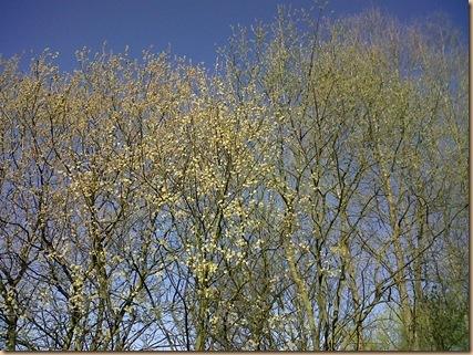 Tree-sky-1_thumb1