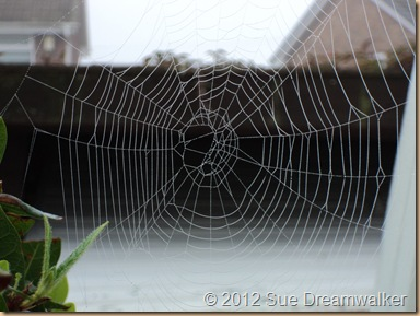 Spiders Web 1