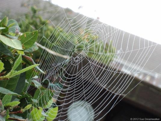 Spieders-Web2.jpg