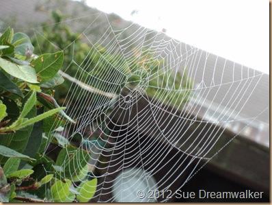 Spieders Web2