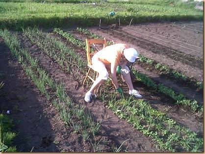 Weeding Onions