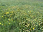 More Meadow land