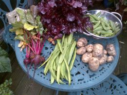 Growing my own Harvest 31-07-12
