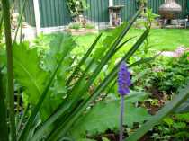 Spring View of the Garden