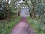 Woodland-Walk.jpg