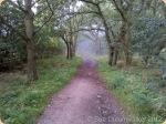 Woodland-Walk_thumb.jpg