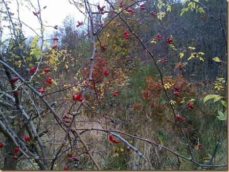 Autumn Walks and Winter Warmers (1/6)