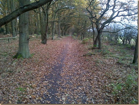 Autumn Walks and Winter Warmers (3/6)