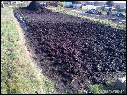 Allotment muck spreading