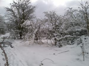 Snow laden hedgerows.