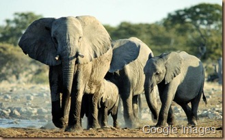 Gaia ~ Earth Day April 22nd African-elephants