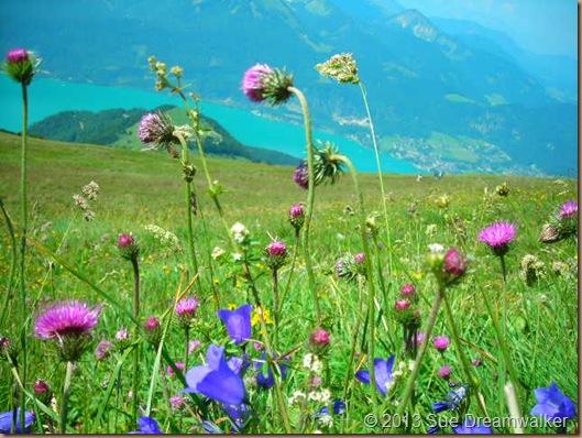 Austria meadow 2008