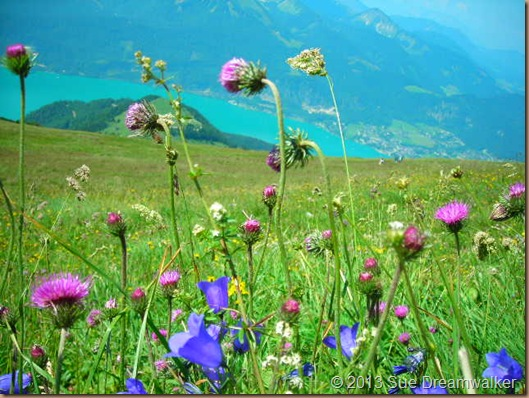 Austria meadow 2008
