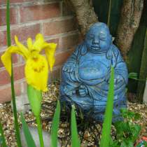 Buddha and Iris