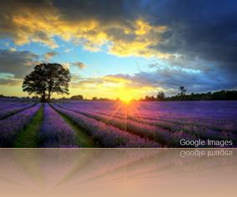 Gaia ~ Earth Day April 22nd Lavender-fields