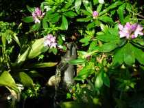 Water feature under the Rhododendron bush