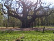 This is the Major Oak, it weighs around 23 tons and has a girth of 33 feet-10 meters.
