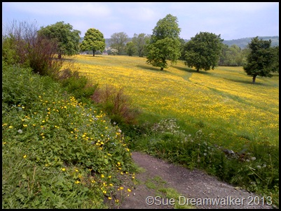Another View of Buttercups in the meadow