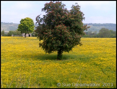 Buttercup Field with Horse-Chestnut Tree