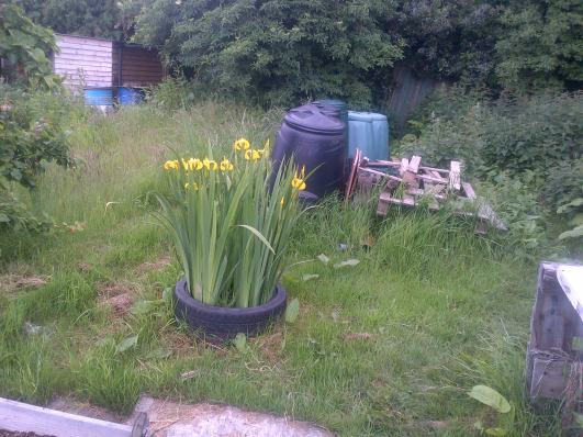 Iris's in the Nettle patch