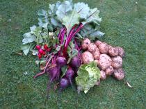 Veggie's from our Garden