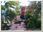 Our-Granddaughter-eating-Peas-among-the-Sunflowers_thumb.jpg