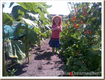 Our Granddaughter eating Peas among the Sunflowers