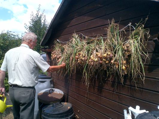 Hubby just hanging the Shallots to dry out