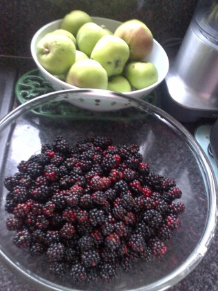 These Blackberries were picked from behind our Allotment Shed,