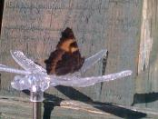 Tortoiseshell underside sat on my dragonfly solar light