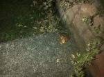 Rescued-Frog.jpg