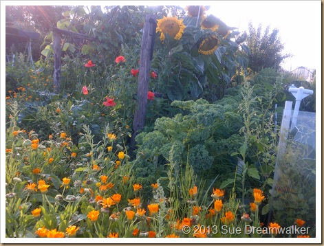 Sunflowers and Marigolds