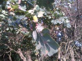 Little Acorns into Mighty Oak trees grow