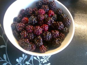 Blackberries picked and soaked to clean them.