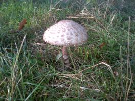 Fungi, If unsure NEVER EAT.