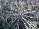 Caterpillar Heaven. Herbert the scare-crow, couldn't scare the caterpillar's :-) The sprouts are just visible below
