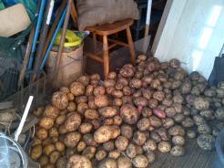 Potatoes Drying