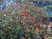 Rose Hips are so versatile