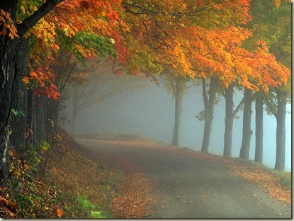 Bound By the Cord. Autumn-beauty_thumb