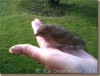 a-bird-in-the-hand_thumb