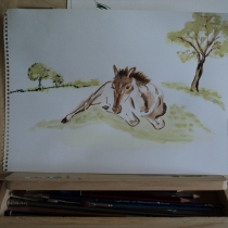 Quick sketch in watercolour of a foal