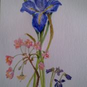 Iris with Blossom and Violets