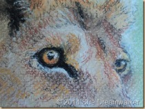 Close up of Lioness.