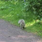 This Squirrel followed us along the path