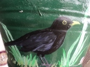 Black Bird close up